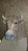 Kuh-Kopf